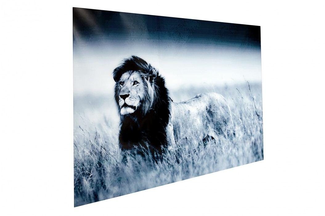 Obraz LION 140x95 cm