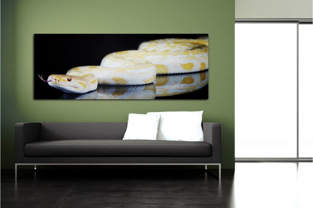 Obraz PYTHON 75x180cm