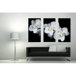 3-dielny obraz ORCHIDEA 30x60 cm - biela/čierna