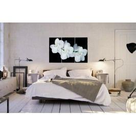 Obraz ORCHIDEA 60x30 - biela