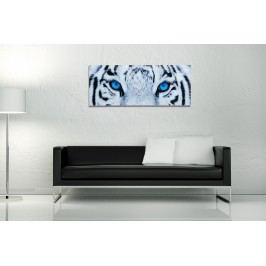 Obraz TIGER EYE 40x100 cm