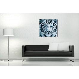 Obraz TIGER EYE 60x60cm - sklo