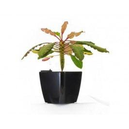 Samozavlažovací kvetináč G21 Cube čierny 22cm