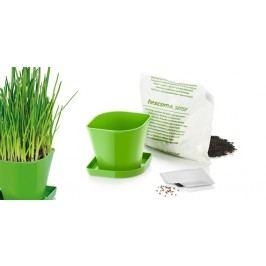 Tescoma súprava na pestovanie byliniek SENSE, pažítka