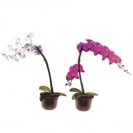 Samolepící dekorace Orchidea