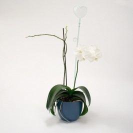 Tyčka k orchideji srdce, sklo, 2 ks, Plastia