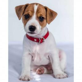Jerry Fabrics Detská deka Jack russel terrier, 120 x 150 cm