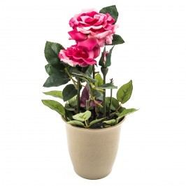 Umrlá kvrtina ruža v kvetináči, ružová, HTH