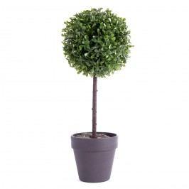 Buxusový stromček v kvetináči čierna, 22 cm
