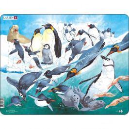 Larsen Puzzle Tučniaky, 50 dielikov