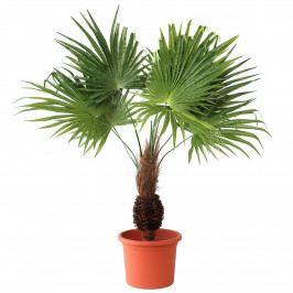 Umelá Palma s kokosovým kmeňom v kvetináči, 60 cm