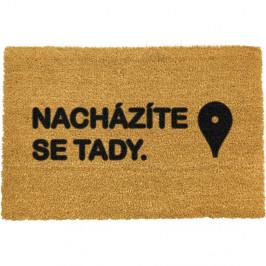 Rohožka Artsy Doormats Tady, 40x60cm