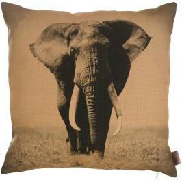 Obliečka na vankúš Apolena African Elephant, 43×43 cm