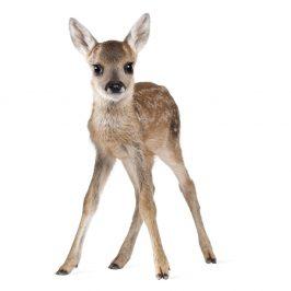 Nástenná samolepka Dekornik Deer Lucy, 72 x 115 cm
