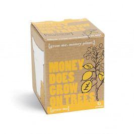 Pestovateľský set so semienkami potosovca zlatého Gift Republic Money Does Grow On Trees