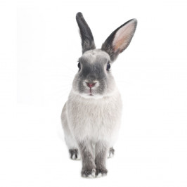 Nástenná samolepka Dekornik Rabbit Harry, 37 x 80 cm