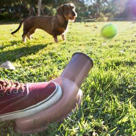 Vrhač loptičiek pre psov InnovaGoods Playdog