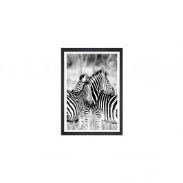 Obraz Tablo Center Zebras, 24 × 29 cm
