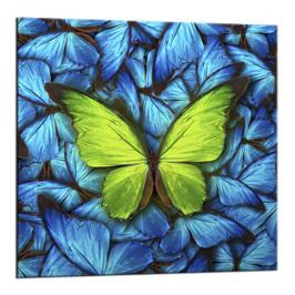 Obraz Styler Glasspik Blue Butterfly, 20×20 cm