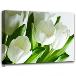 Obraz Styler Canvas White Tulips, 60×80 cm