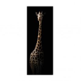 Obraz Styler Glas Animals Gira, 50×125 cm