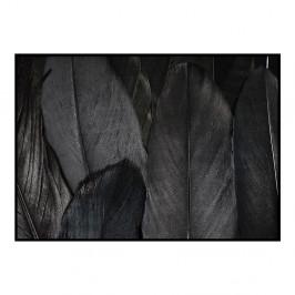 Plagát DecoKing Feathers Black, 100 x 70 cm
