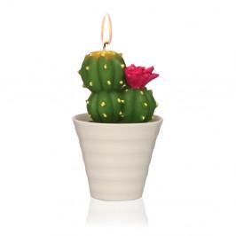 Dekoratívna sviečka v tvare kaktusu Versa Cactus Fila