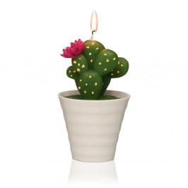 Dekoratívna sviečka v tvare kaktusu Versa Cactus Paol