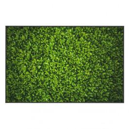 Zelený koberec Oyo home Ivy, 100x140cm
