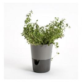 Sivý samozavlažovací kvetináč Plastia Rosmarin