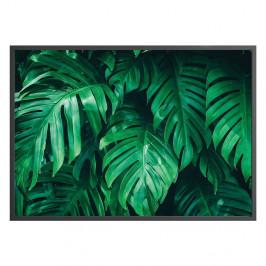 Nástenný plagát v ráme MONSTERA, 70 x 100 cm
