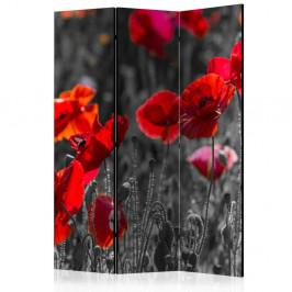 Paraván Red Poppies Dekorhome 135x172 cm (3-dielny)
