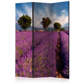 Paraván Lavender field in Provence, France Dekorhome 135x172 cm (3-dielny)