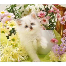 Forbyt, Fotovankúš, Biela mačička, 40 x 40 cm samostatný návlek