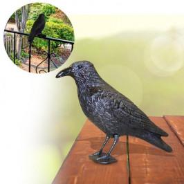 Havran na odplašenie holubov